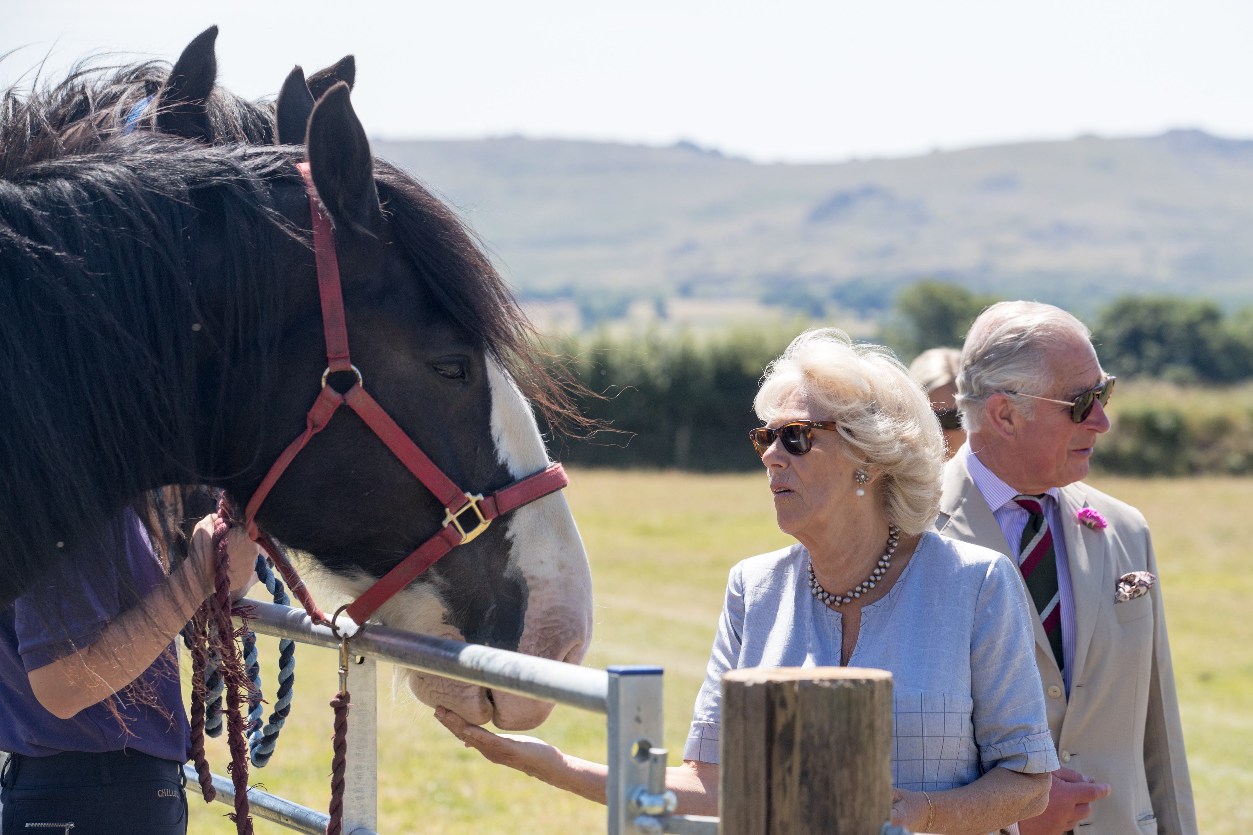 Camilla, the Duchess of Cornwall, and Prince Charles, Prince of Wales greet horses as they visit Dyfed Shire Horse Farm in Eglwyswrw on July 3, 2018 in Pembrokeshire, Wales. Dyfed Shire Horse Farm is a family run enterprise that has been breeding the Dyfed bloodline of Shire Horses for almost 40 years, on a farm that has been in the family since 1849.